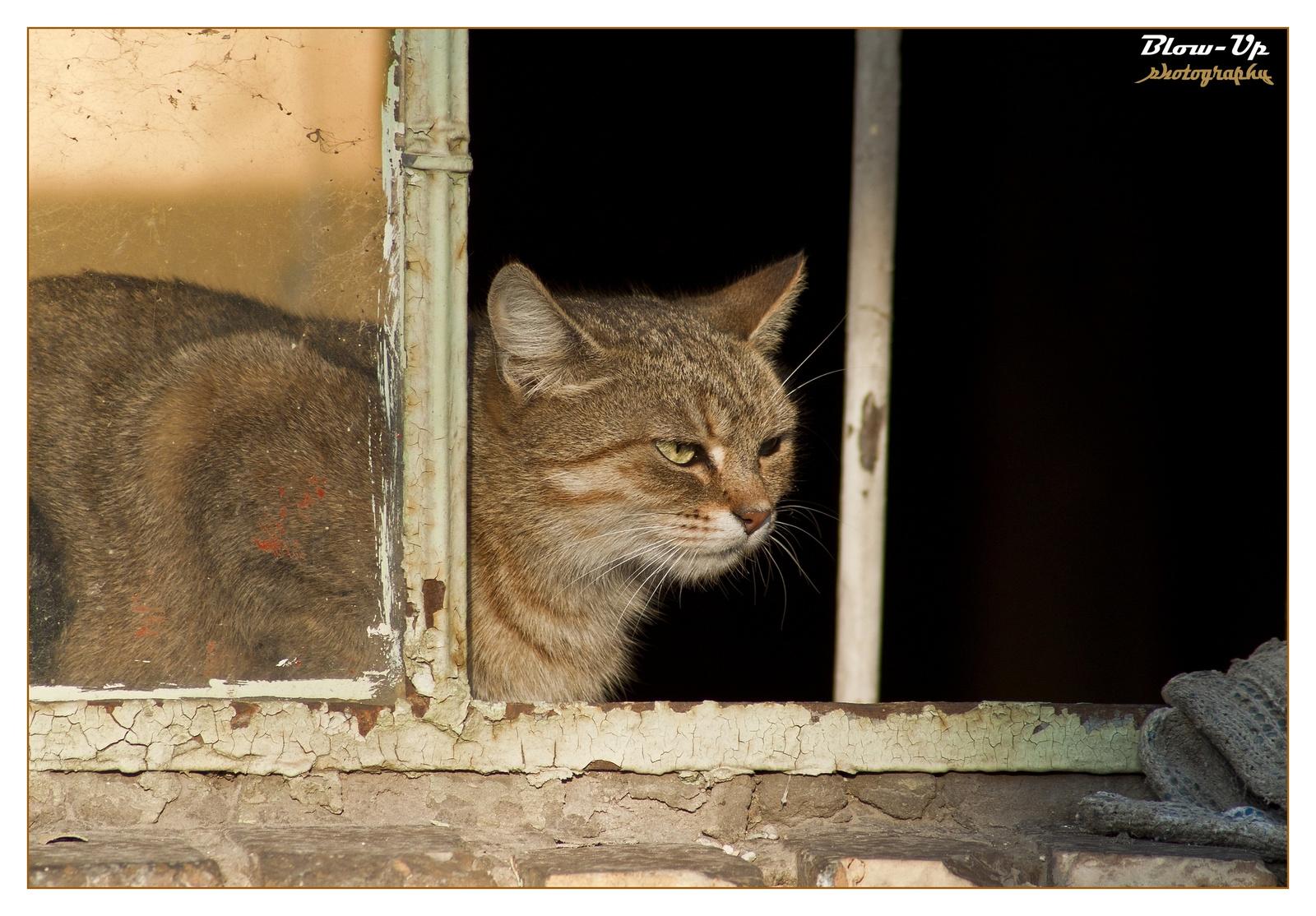 Csepeli cica
