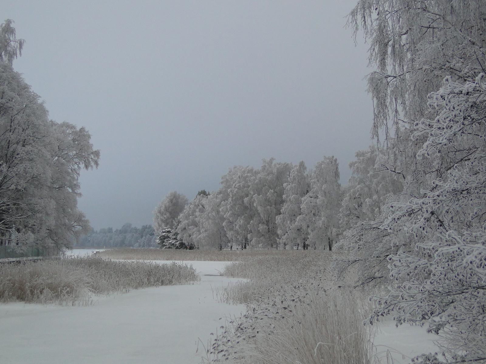 Hófehér