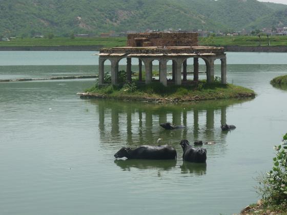 salga: Jaipur India