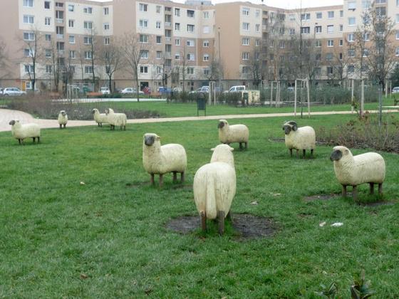 Székesfehérvár - János vitéz park, birkákkal2