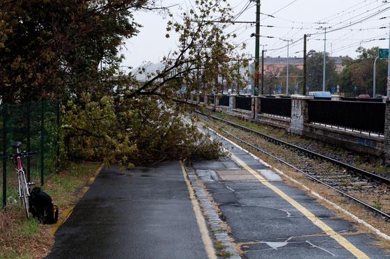 darthwalk: Bringaútra dőlt a fa