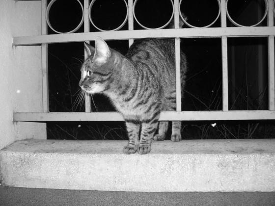 Tuninglove: Beépült a kerítésbe :D