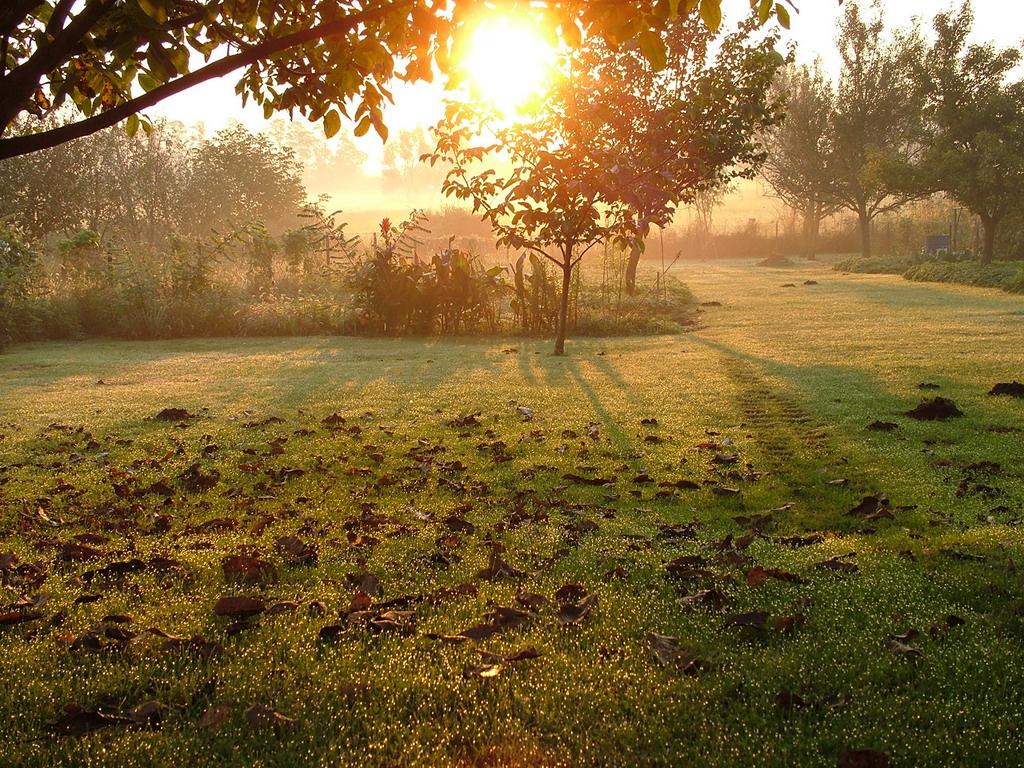 Őszi reggel