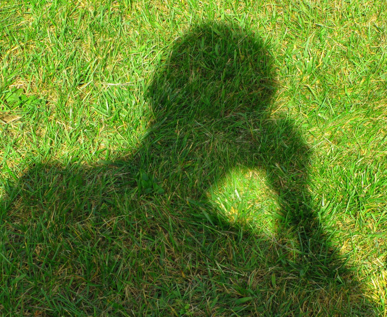 Fotós a fűben