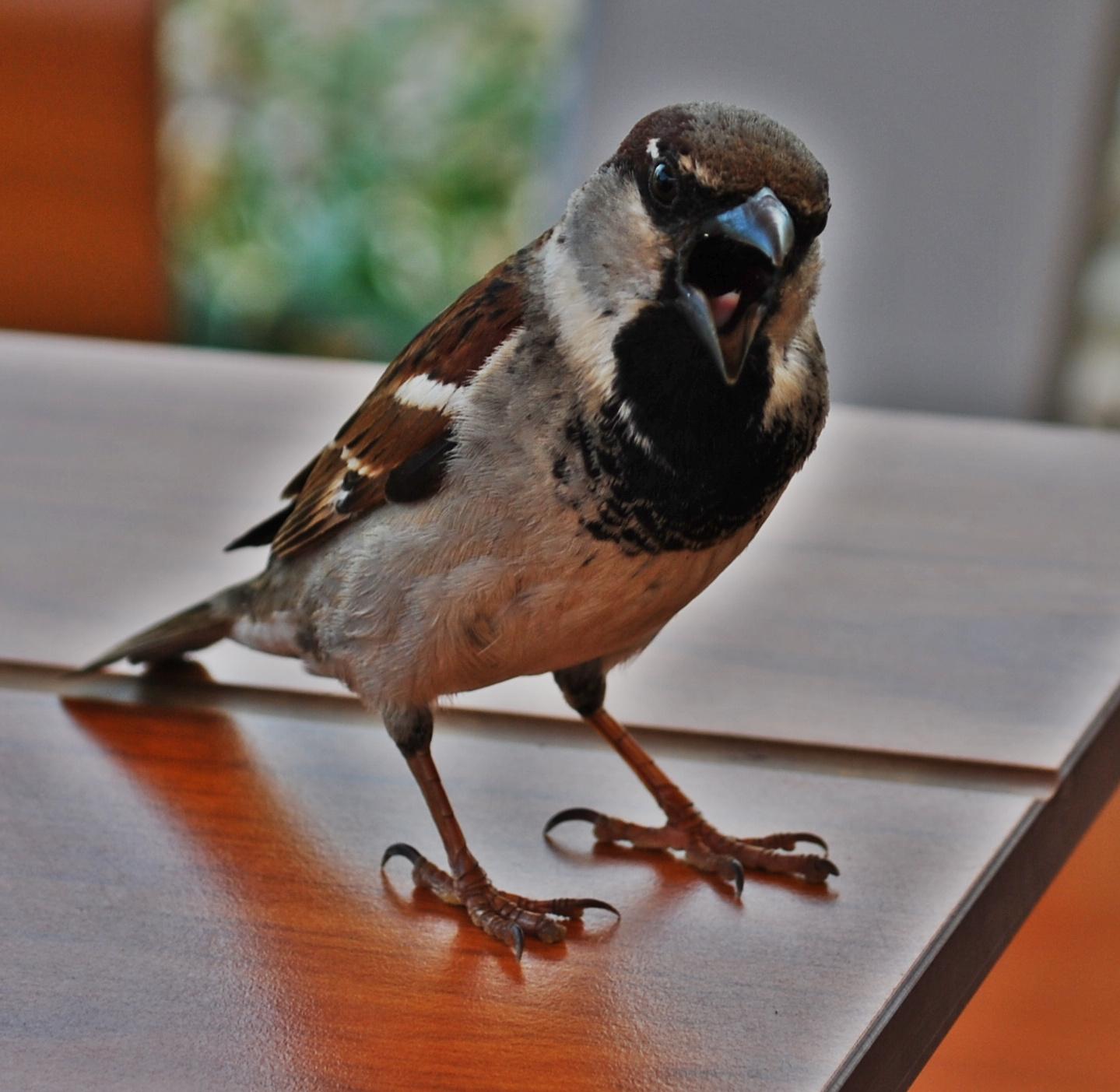 Kicsi vagyok, asztalra állok, és onnan egy nagyot kiáltok...